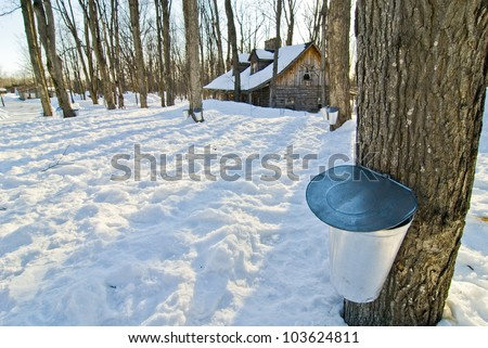 Sugar Shack in the spring - stock photo