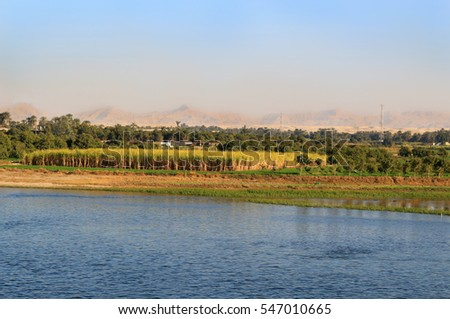 Sugarcane crops with palm trees along the shore of the Nile River in Egypt, Africa