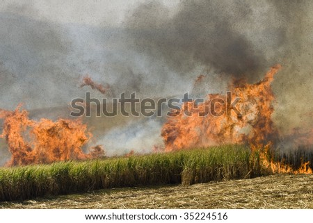 Sugarcane on Fire - stock photo