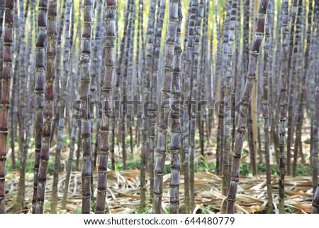 Corrugated Metal Wall Stock Photo 110290304 Shutterstock
