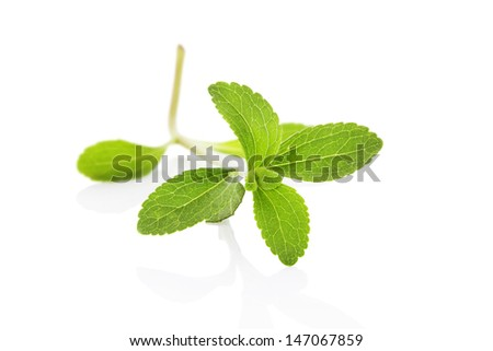 Sugarleaf stevia herb isolated on white background with reflection. Sweet herb, alternative to sugar, healthy lifestyle. - stock photo