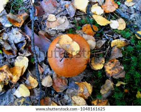 Fungi Stock Images  RoyaltyFree Images   Vectors
