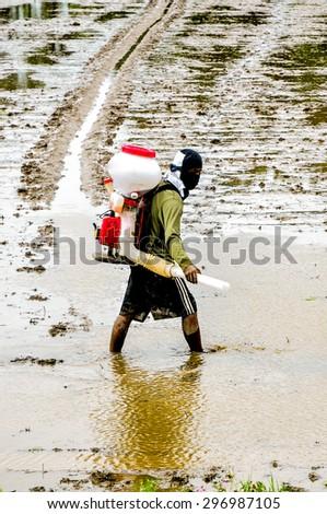 SUKHOTHAI, THAILAND - JUNE 23: Unidentified Thai farmer sowing rice seeds by sprayers on June 23, 2015 in Sukhothai, Thailand. - stock photo