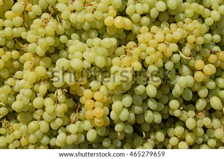 Sultana white seedless grapes background texture. Grape fruit closeup.