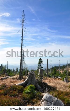Sumava mountain, Bark beetle dead forest - stock photo
