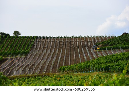 Summer.A view of the vineyards in the valley.