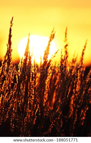 Summer abstract nature background with grass in the meadow and sunset in the back  - stock photo