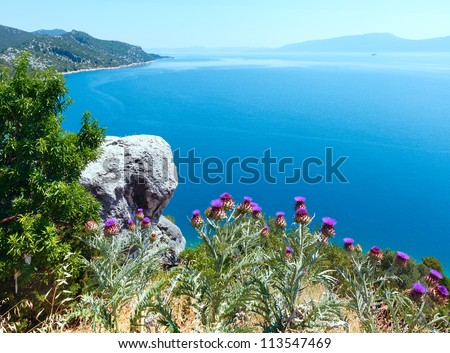 Summer  Adriatic Sea coastline view with tree, thistle plant and stone in front (Croatia) - stock photo