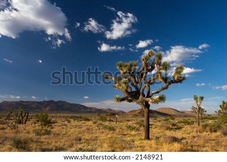 Summer Afternoon in Joshua Tree National Park, in the Mojave Desert of Southern California. - stock photo