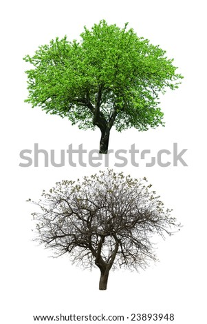 summer and autumn trees isolated - stock photo
