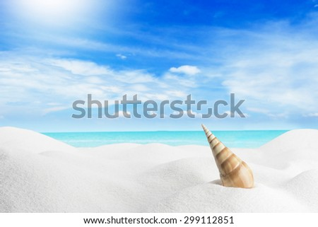 Summer and Beach Concept. Sandy Beach with Shell