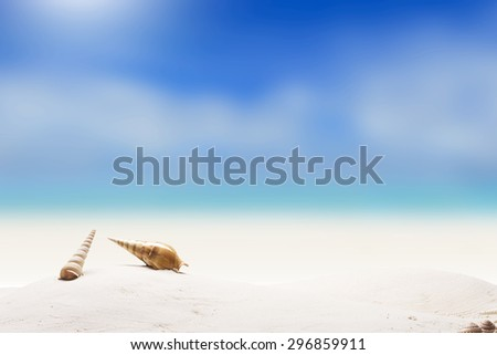 Summer and Beach Concept. Sandy Beach with Various Shell - stock photo
