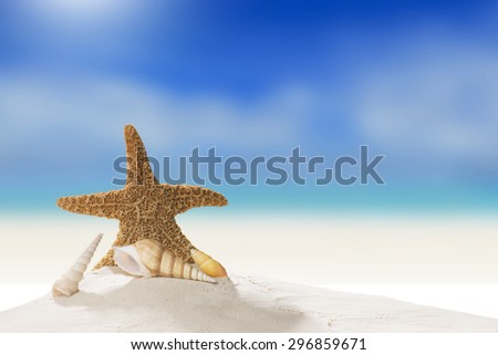 Summer and Beach Concept. Sandy Beach with Various Shell And Starfish - stock photo