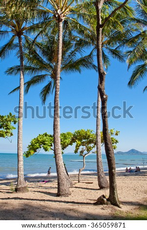 Summer at a tropical paradise, palm beach, Cairns Australia