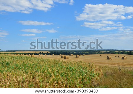 Summer Autumn Rural Landscape Field Meadow With Hay Bales After Harvest Under Sunset Light. - stock photo