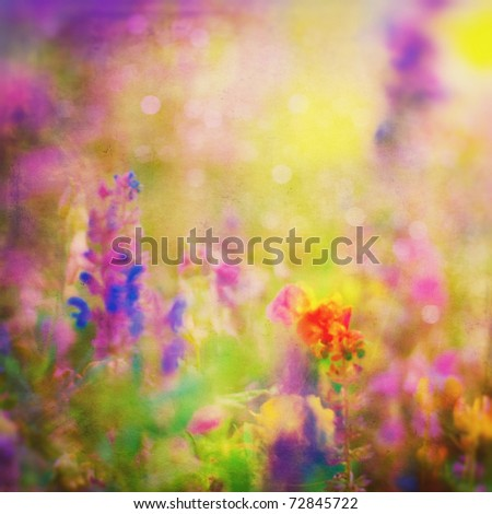 Summer Background. Flowers. Spring Background. Nature Background. Meadow - stock photo