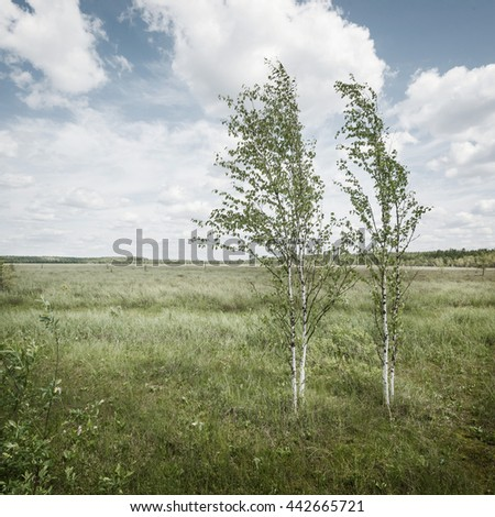 summer background in the forest