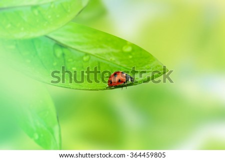 Summer background.Ladybug on green leaf and green background. - stock photo