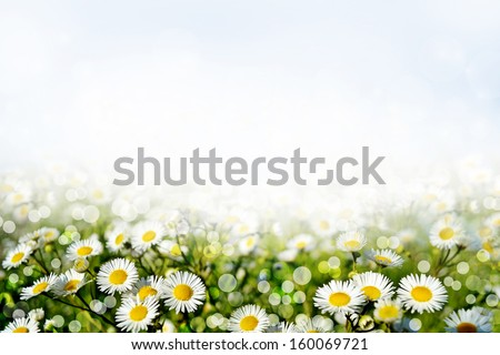 Summer. Background of flowers. - stock photo