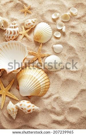 summer background. seashells border on sand - stock photo