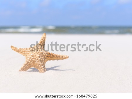 Summer background. Starfish on sand and blue sky. - stock photo