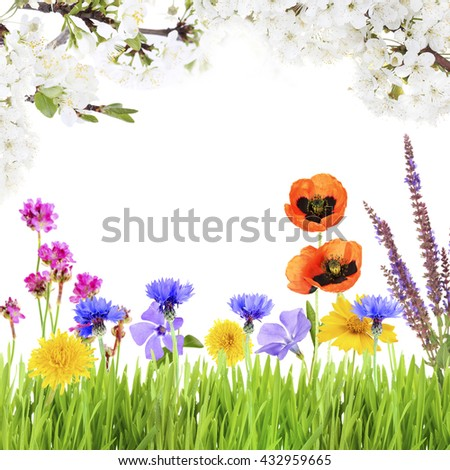 Summer background with beautiful meadow flowers - stock photo