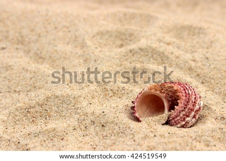 Summer background with cute sea shell on bright soft sand, copy space - stock photo