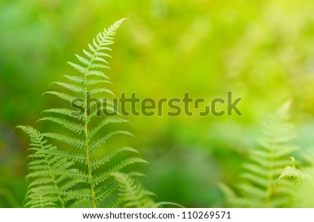 Summer background with fern leaf - stock photo