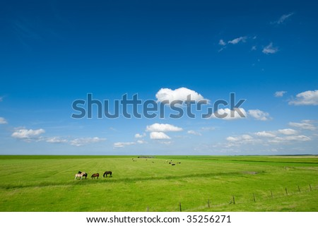 Summer background with horses in the field  and bright blue sky - stock photo