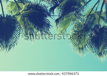 Summer background with Palm tree against sky. Sea tour. - stock photo