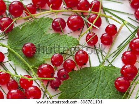 Summer Background with Red Currant and leaf