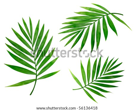 Summer background with tropical palms isolated on white - stock photo