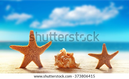 Summer beach. Starfish and seashell on a sandy beach. The ocean, the beautiful sky and clouds.