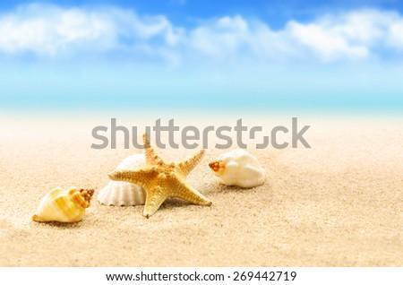 Summer beach. Starfish and seashell on the sand. - stock photo