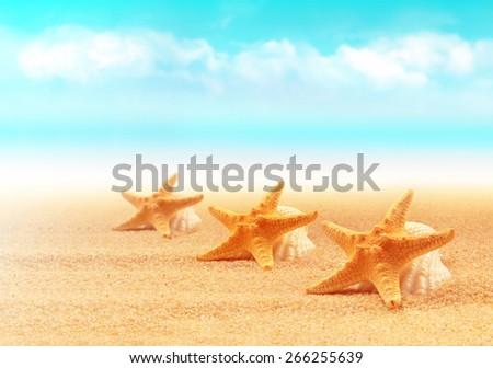 Summer beach. Three starfish on the seashore. - stock photo