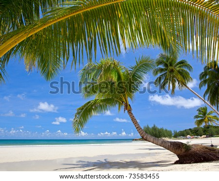 Summer beach with palm trees near the sea under blue sky. Tropical nature view. - stock photo