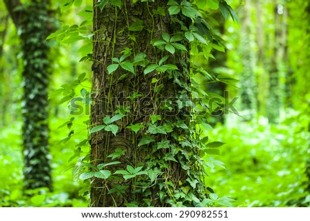 Summer beautiful green forest - stock photo