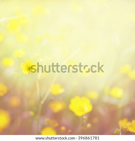 Summer blossoming buttercups background, selective focus, toned - stock photo