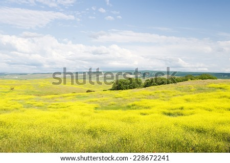 Summer blossoming fields in mountains