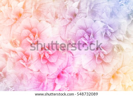 Summer blossoming petunias, selective focus, shallow DOF, toned, light and heart bokeh background, pastel and soft card