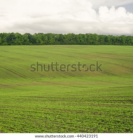 Summer blue sky. Nature landscape. Meadow with green grass, plants. Sunny spring scene.Rural uotdoor countryside beautiful agriculture background with pasture, lawn, clouds. - stock photo