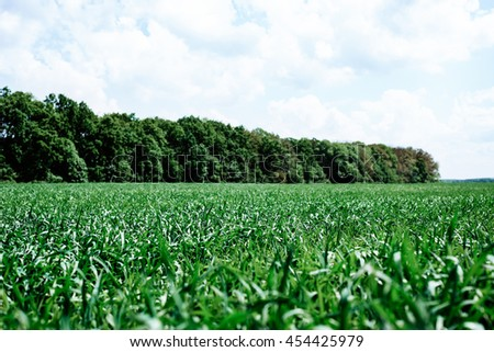 Summer blue sky. Nature landscape. Meadow with green grass, plants. Sunny spring scene.Rural outdoor countryside beautiful agriculture background with pasture, lawn, clouds. - stock photo