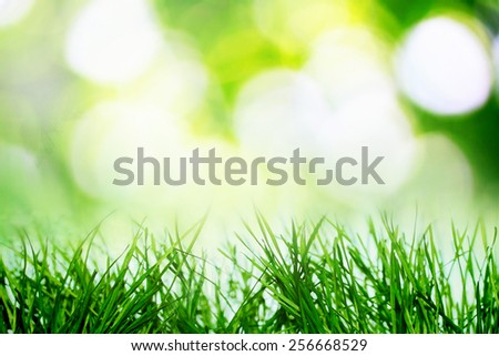 Summer bokeh with sunlight  - stock photo