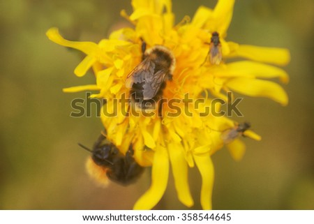 summer Bumble bee insect flower macro - stock photo