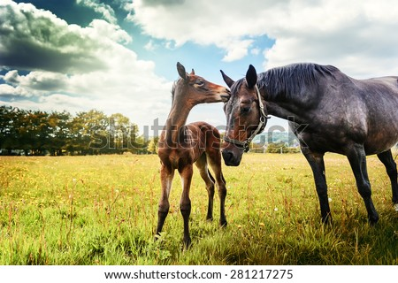 Summer country landscape with horse and foal - stock photo