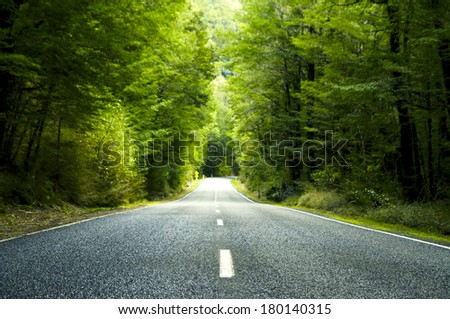 Summer Country Road Covered by Lush Trees, New Zealand - stock photo