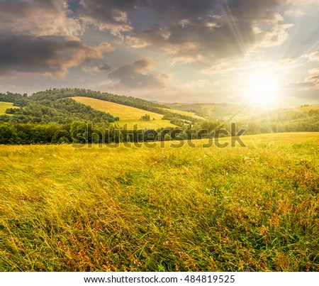 summer countryside landscape with tree on meadow in mountains and haystacks on a far green slop in evening light