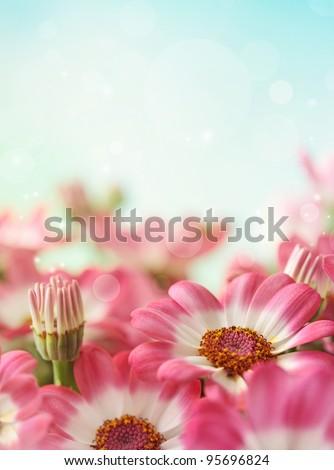 Summer daisy flower and blue sky - stock photo
