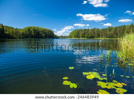 Summer day at a forest lake - stock photo