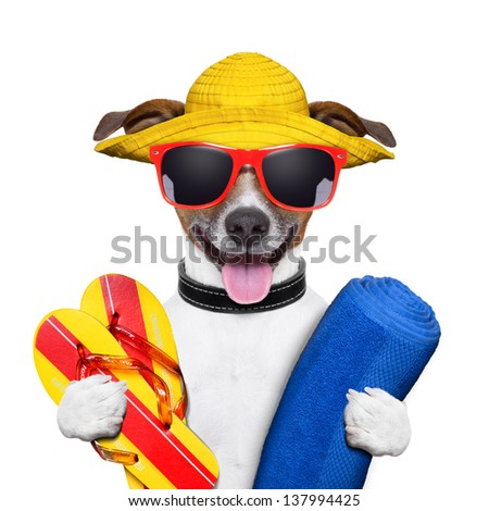 summer dog with towel and flip flops - stock photo